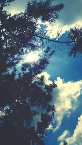 Tree Backgrounds Blue Sky Cloud - Sky