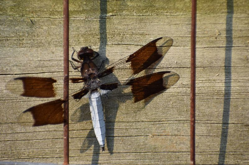 Side view of man walking on wooden wall