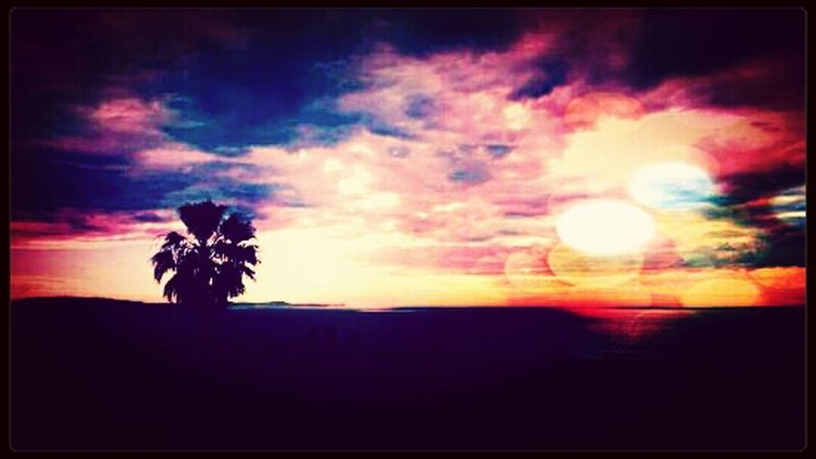 Collaroy Plateau (Different editor ) Sunset Beautiful Sunset Collaroy Picture Perfect EyeEm Best Shots Sunset #sun #clouds #skylovers #sky #nature Beautifulinnature Naturalbeauty Photography Landscape [ [ Sunset #sun #clouds #skylovers #sky #nature Beautifulinnature Naturalbeauty Photography Landscape [a: Eyeembestpics Sunset Skyporn Sun_collection Gorgeous Beautiful Flowers Floridasunsets Sky_art Skyart Skylovee Sun_collection, Sky_collection, Cloudporn, Skyporn Sunset #sun #clouds #skylovers #sky #nature #beautifulinnature #naturalbeauty Photography Landscape [