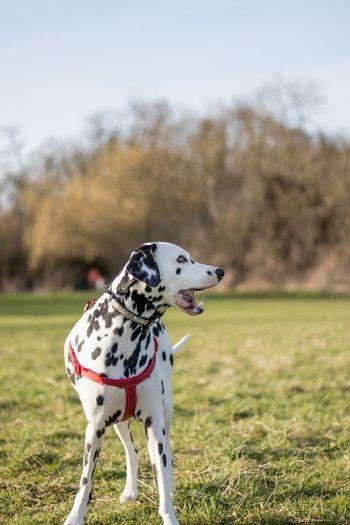 Close-Up Of Dog Against Sky