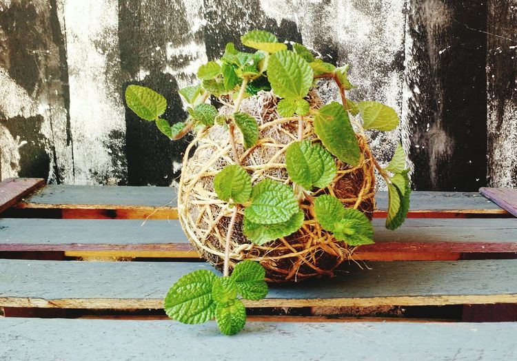 Myjob Meutrabalho Planta Decoração Kokedama Naturelover Plant Green Color Esfera