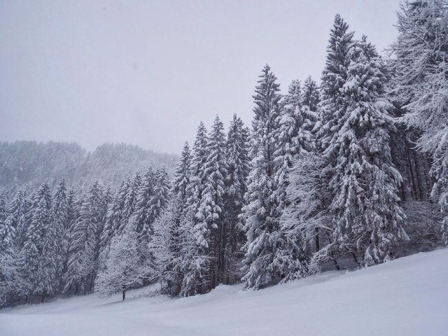 Landscape Nature EyeEmSwiss Enjoy The Silence Trees snow Snow Winter