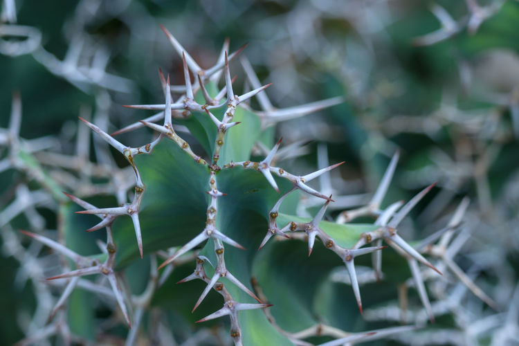 fleshy plant of thorns Nature Flora Plant Arid Dessert Green Close-up Close-up Cactus Thorn Spiked Plant Life