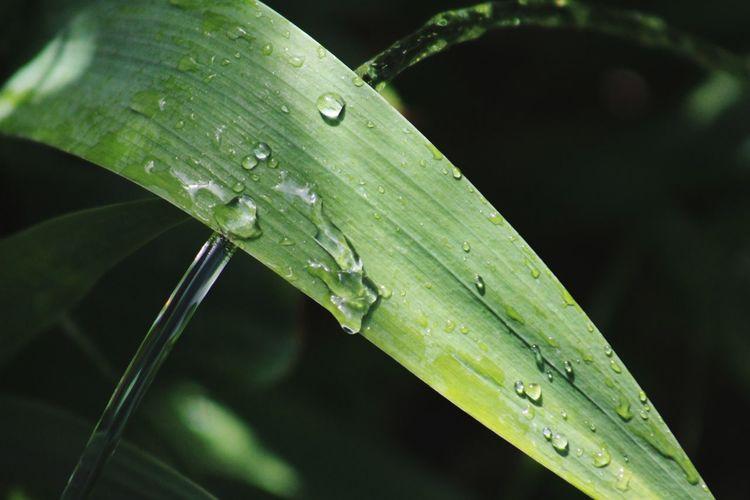nature, plant,