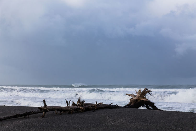 Driftwood on