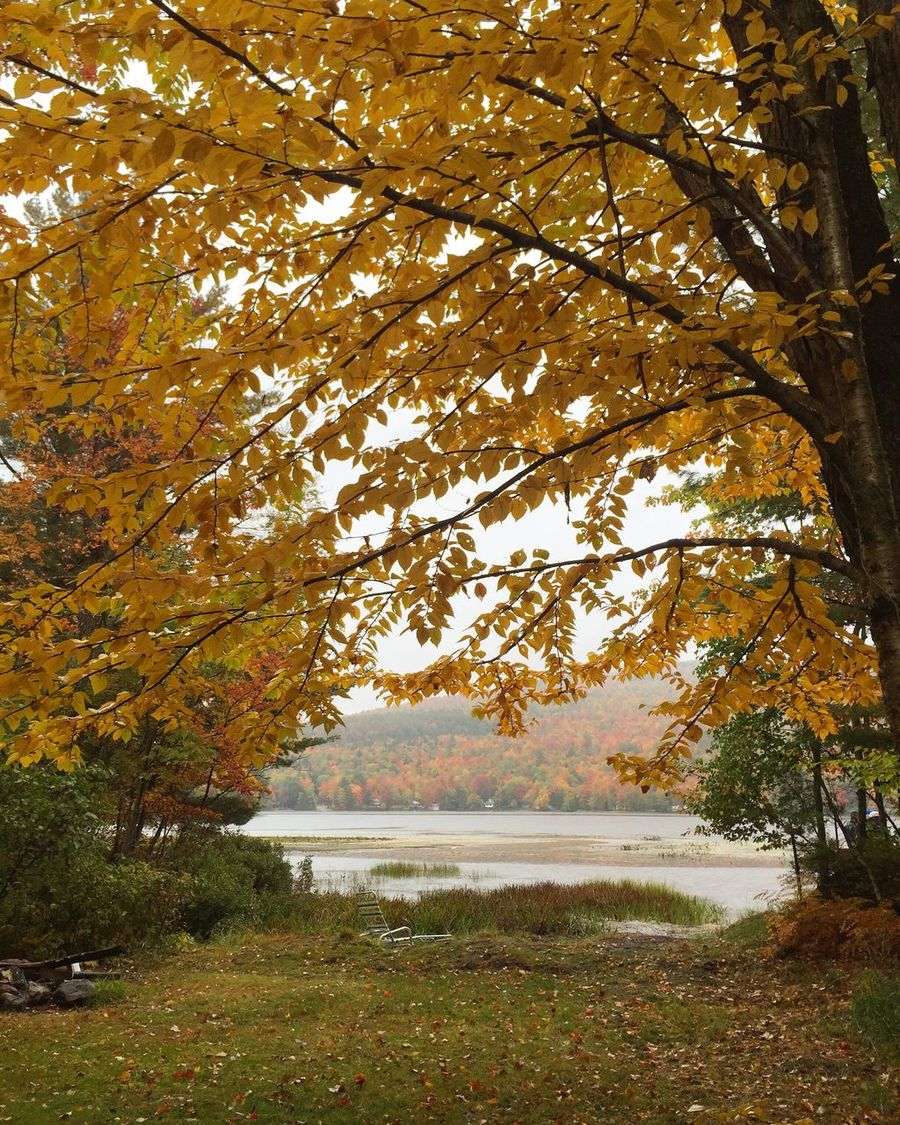 Welcoming fall in Maine. Tree Water Tranquility Autumn Tranquil Scene Lake Change Scenics Beauty In Nature Nature Growth Branch Day Majestic Outdoors Non-urban Scene Vacations Green Color Tourism No People Maine Folliage Fall Autumn