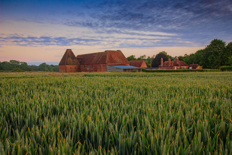 Oast House, Garden Of England, Kent, England. Architecture Sky Built Structure Nature No People Plant Hops Beer Brewing Iconic Buildings Vivid International Getty Images EyeEm Gallery Travel Destinations Tourism Sunrise Countryside Rural Scene History Field Agriculture Landscape Land Growth Environment Building Exterior Farm Crop  Beauty In Nature Scenics - Nature Building Green Color Tranquility Outdoors Plantation