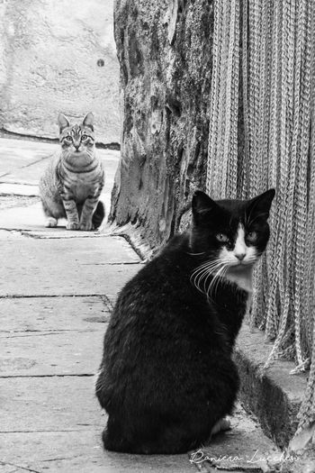 Animal Themes Cat Cats Domestic Cat Feline Pets Waiting Cats