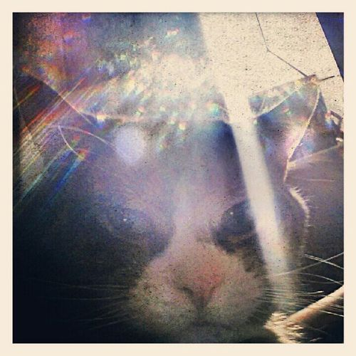 maddie in the sun. #cats #pets #animals #family