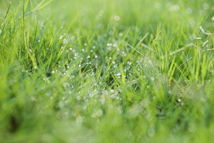 Full Frame Shot Of Water Drops On Grassy Field