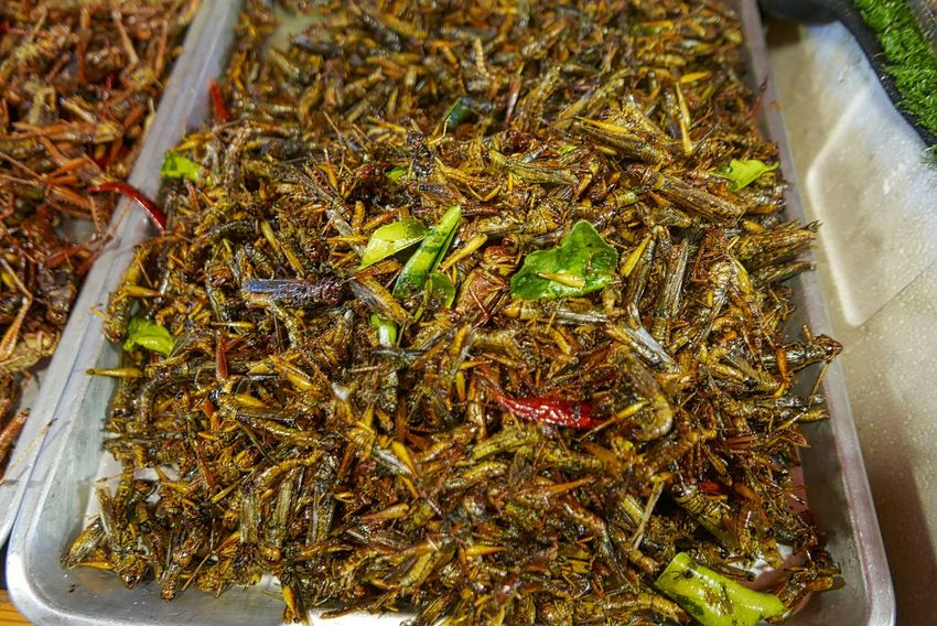 Fried insects sold a local night market in bangkok Local Delicacies Close-up Day Food Food And Drink Freshness Fried Food Grasshopper Healthy Eating High Angle View Indoors  Insects  Market No People Ready-to-eat Retail