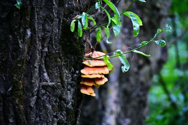 Mushroom on the