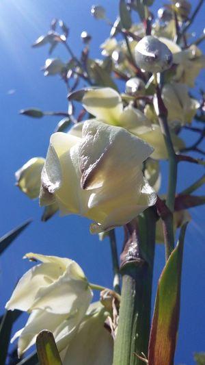 Nature Flower Freshness Beauty In Nature Particolari Colorcolorcolor Think Positive Nofilter Noedit Primavereggiando Primavera2017 EyeEm Best Edits Springtime EyeEmNewHere EyeEm Nature Lover ❤