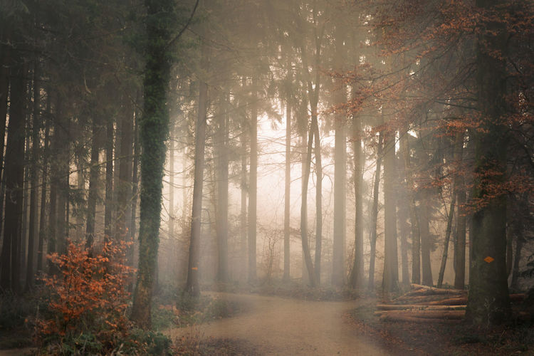Autumn Beauty In Nature Change Day Fog Forest Growth Hazy  Land Mood Nature No People Non-urban Scene Outdoors Plant Scenics - Nature Streaming Tranquil Scene Tranquility Tree Tree Trunk Trunk WoodLand