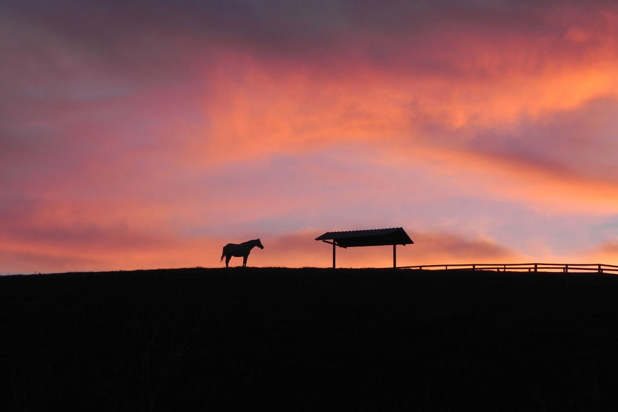 Horse on clouds Red Sky Red Clouds Quarter Horse Animal Themes Horse No People Silhouette Sky Sunset Tranquility The Great Outdoors - 2018 EyeEm Awards Countryside Farm Animal