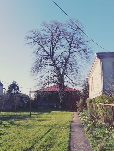 "Home )))) Traditional Mengrelian house called ""oda"" and 150 years old lime tree in my yard )))) Here Belongs To Me"