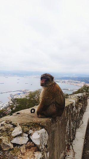 Galaxy S7 Animal One Animal Sea Beach Animal Wildlife Ape Mammal Outdoors Sitting Monkey Day Baboon Sky Water Animal Themes Nature No People