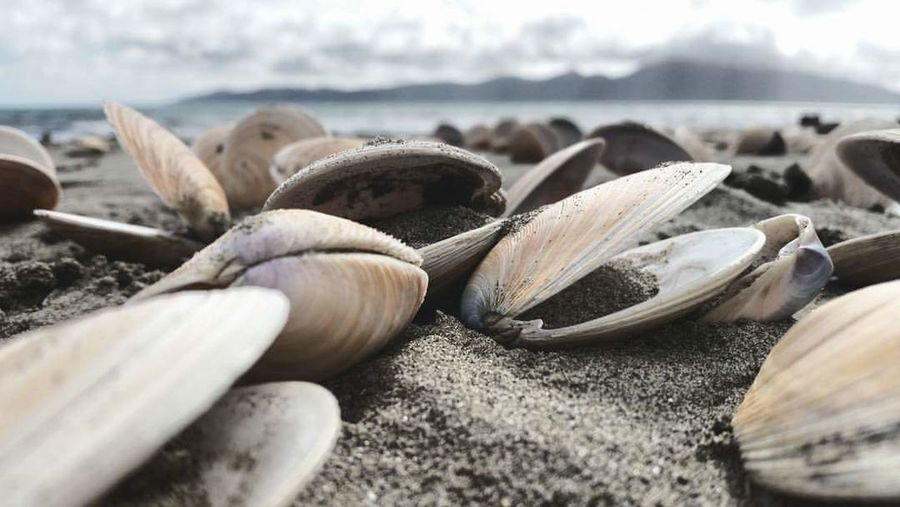 A grave yard of pipis or a history of life Pipis Beach Nature Beautiful Perception
