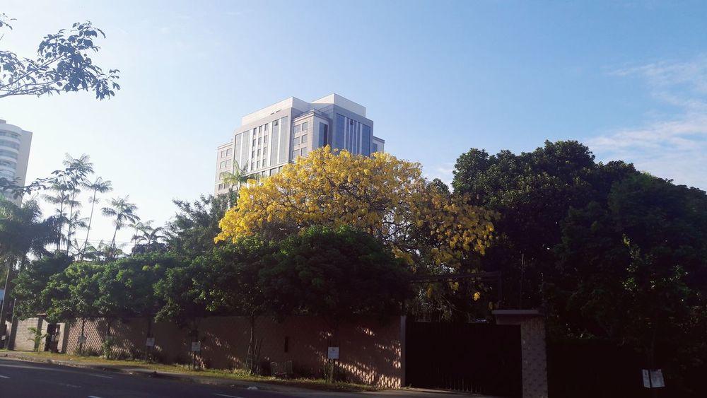 Rua Terezina, Adrianópolis Nature Photography Buildings & Sky Urban Nature Architecture Tree Day Sky Amazonas-Brasil