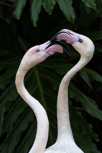 Close-up of flamingos against plants