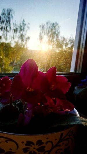 Любимые цветочки в 5 утра) цветыпрекрасны расвет)) Королёв 5утра First Eyeem Photo