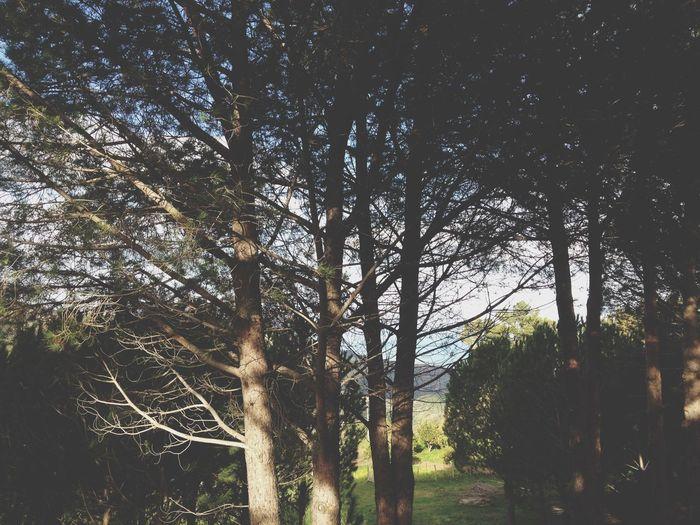 Green Sicily Trees EyeEm Nature Lover Naturelovers