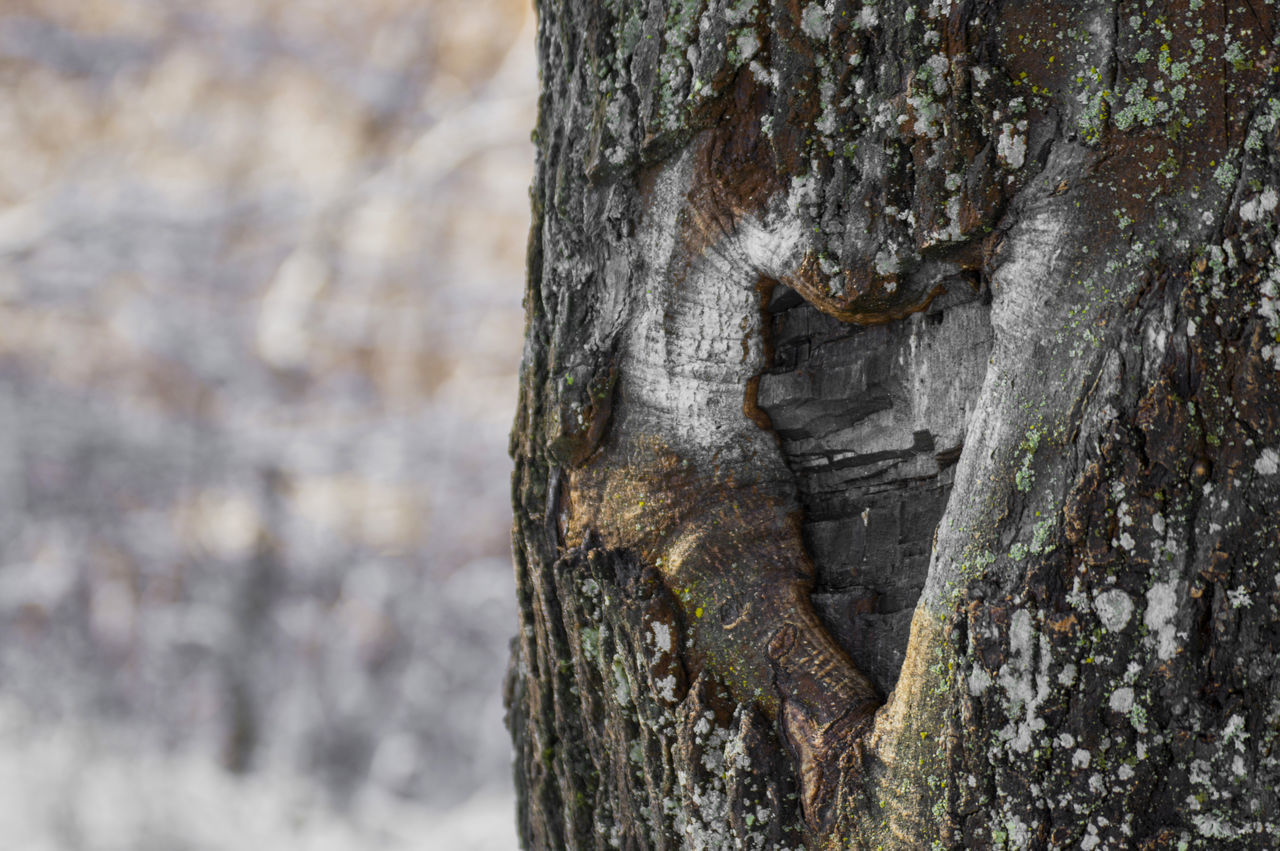 tree trunk, tree, textured, focus on foreground, day, no people, close-up, outdoors, wood - material, nature