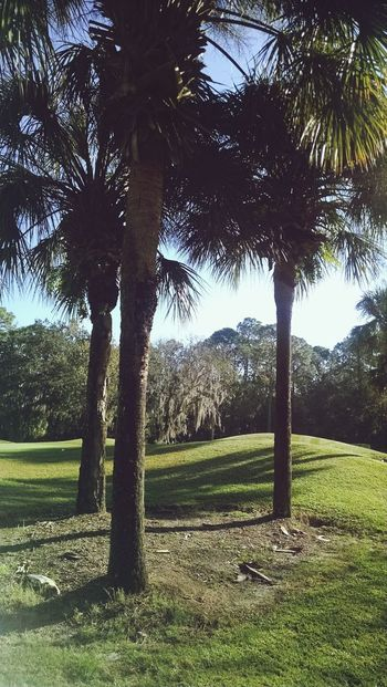 Golf Course East Lake Woodlands Golf Course, Oldsmar, FL Palm Trees Nature Photography Fairway On Golf Course Green On Golf Course Golf Course Beauty Golf Course Photography Tree Tranquility Grass Nature Tranquil Scene Beauty In Nature Scenics Outdoors Sky An Eye For Travel