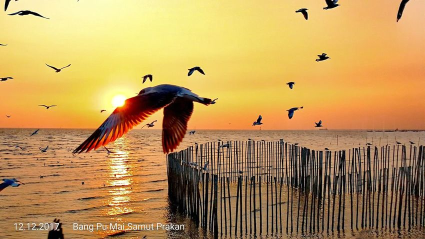 Animals In The Wild Bird Animal Themes Sunset Beauty In Nature Flock Of Birds Thailand🇹🇭 Samutbakan Today 2017 Water Eye4photography  Beauty Silhouette Trending Now EyeEm Selects Close-up Domestic Animals Outdoors No People Spread Wings Animal Wildlife Large Group Of Animals Sky Nature AI Now