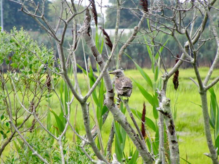 Beauty In Nature Outdoors Tree branches Tall Grass Bird In A Branch In A Tree Green Color Field No People Focus On Foreground