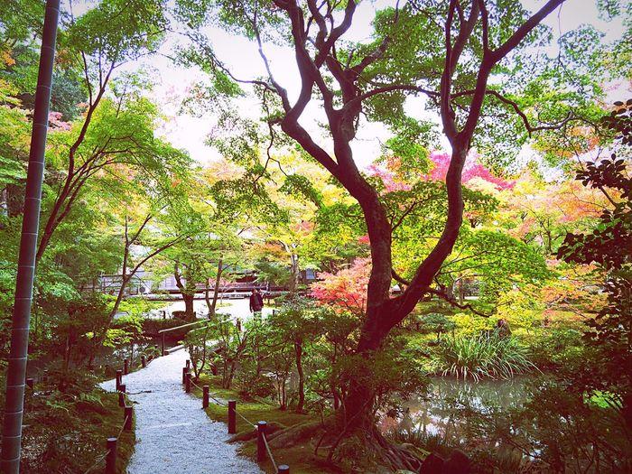 紅葉 Relaxing 京都Japan 一乗寺 園光寺