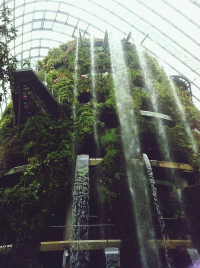 Garden by the bay,Singapore Went There! You Guys Should Go There!!
