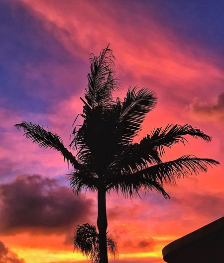 Pink Sundown Tropical Climate Sunset Sky Tree Silhouette Plant Orange Color Beauty In Nature Cloud - Sky Dramatic Sky Palm Tree Dusk