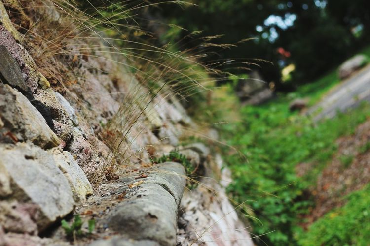Time Old Buildings Old Ruin Ruin Castle Walls Wall Trapped Spider Web Close-up Growing Archaeology Civilization Ancient