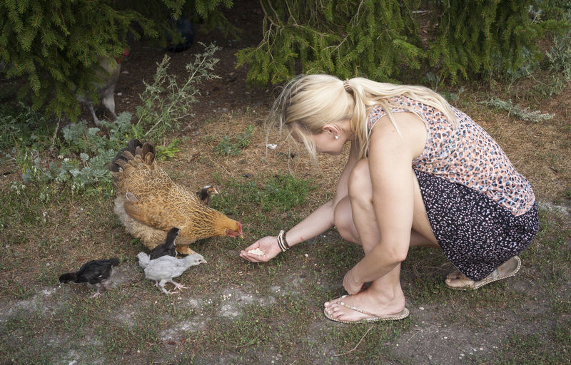 Chicken Animal Wildlife Blond Hair Casual Clothing Crouching Day Domestic Domestic Animals Full Length Hair Hairstyle Mammal One Animal One Person Outdoors Pets Plant Vertebrate Women