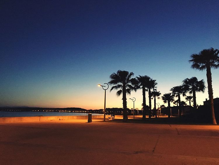 Palm Tree Tree Beauty In Nature Beach Nature Blue Clear Sky Scenics Outdoors Tranquil Scene Sea Sunset No People Sky Water Day Horizon Over Water Sommergefühle