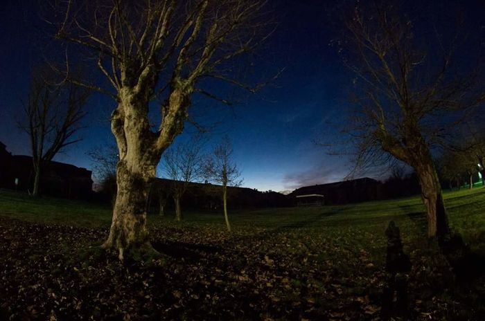 Alessandria Cittadella Nightphotography Tree Field Landscape Beauty In Nature Star - Space Tranquility Blue Sky Sky