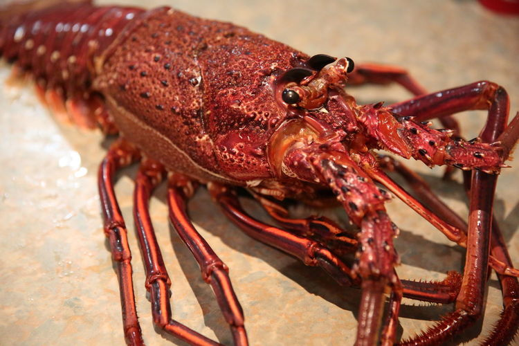 Close-up of lobster on table