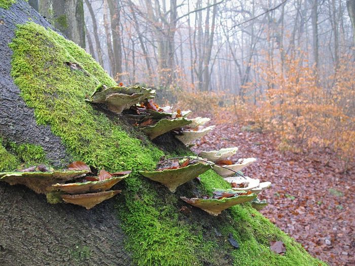 Tree Nature Growth Beauty In Nature Tranquility Outdoors Leaf Freshness No People Plant Day Tree Trunk Forest Tranquil Scene Eyeemphotography Eye Em Nature Lover EyeEmbestshots Toad Stool Mushrooms 🍄🍄 Woodland Path Foggymornings Beauty In Nature Foggy Day Frosty Days Fungi Growth