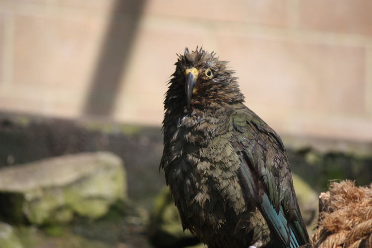 New Zealand Kea Bird Bristol Zoo Zoo Zoo Animals  Nature Wildlife & Nature Natural Beauty Wildlifephotography