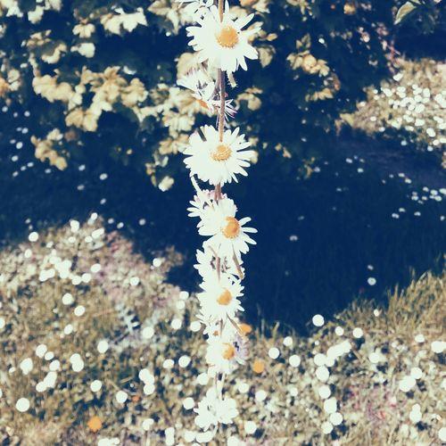 flower crown Nature White Spring Flowers Daisy Daisychain Fresh Sunnydays Walking Around Green