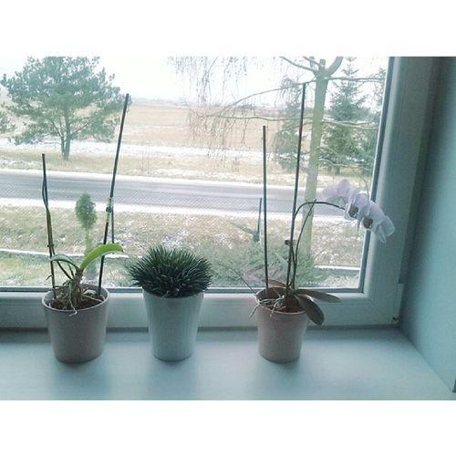 śnieg Jupii Flowers Instaphoto white plants love chorajestem gardloboli ??