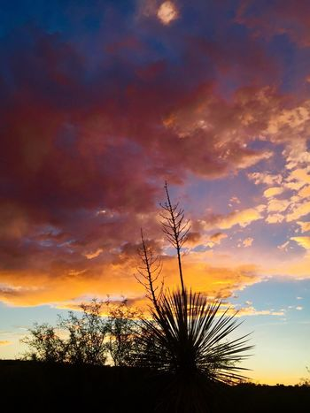 Sunset in Discovery Park in Safford, Arizona during monsoon season 2016. Arizona Sky Safford Light Monsoonseason Nature Clouds Beauty In Nature Clouds And Sky Arizona Skypainters Nature Photography Skies Sky Landscape_photography Outdoor Photography Sunset Beauty Mothernature Desert