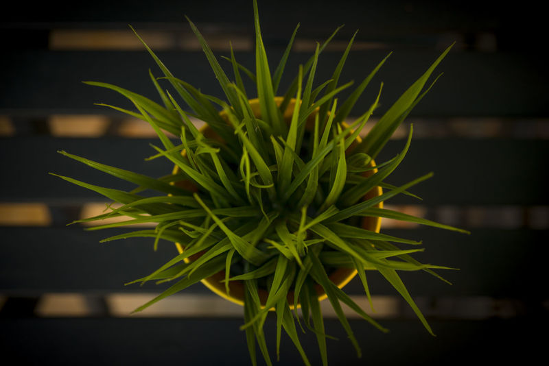 Flower Front Focus Grass Green Leaf Outdoors Top View Vase Yellow