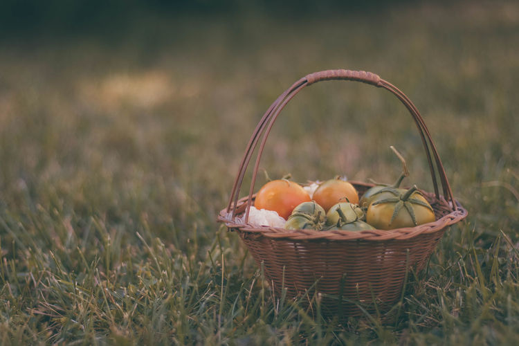Fruits in basket on field