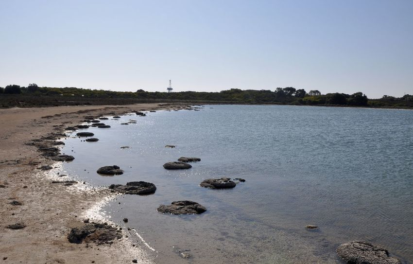 Peaceful Lake Thetis landscape with stromatolites, living fossils, in Western Australia. Australia Beach Fossil Geology Lake Lake Thetis Landscape Layered Living Marine Natural Phenomenon Nature Outdoors Peaceful Rare Saline Sand Scenics Sediment Shallow Sky Stromatolites Unique Water Western Australia