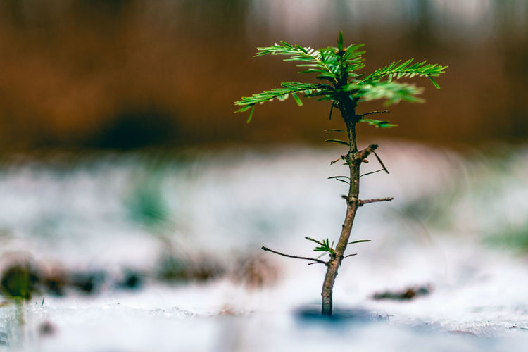 Little fella. [55/365] 2016.12.03 Beauty In Nature Bokeh Close-up Closeup Day Fragility Growth Landscape Leaf Little Little Things Nature No People Outdoors Plant Tranquility Tree Water Woods
