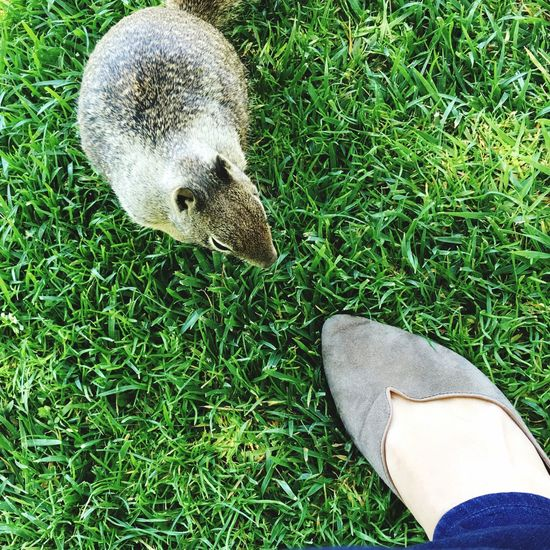 First Impressions First Impression Squirrel Shoes Grass Don't Feed The Squirrels Related Twins Look-a-like Scotts Valley California United States