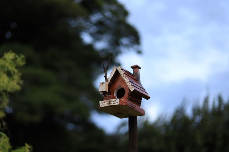 Bird house Bird