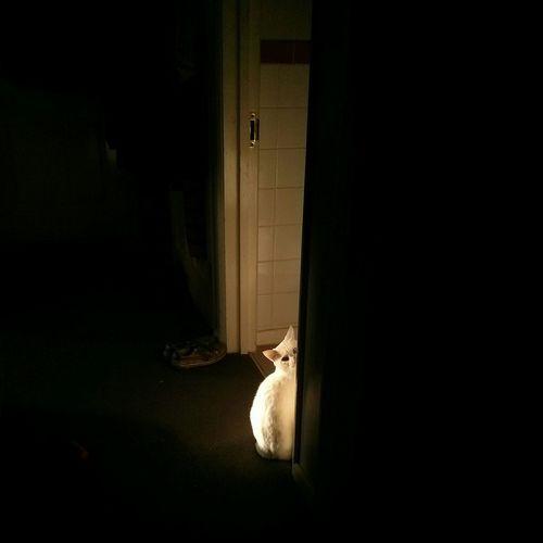 Some Geoff Hiding